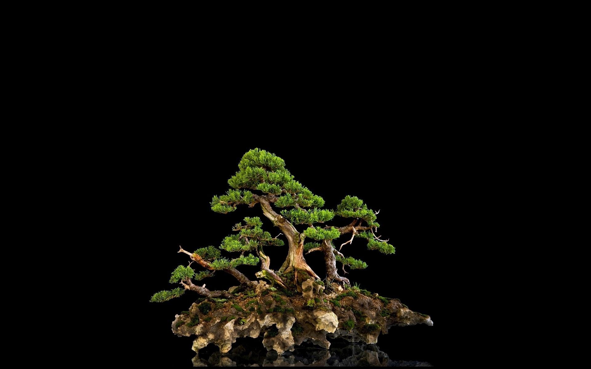 97947 download wallpaper Nature, Wood, Tree, Bonsai, Black Background screensavers and pictures for free