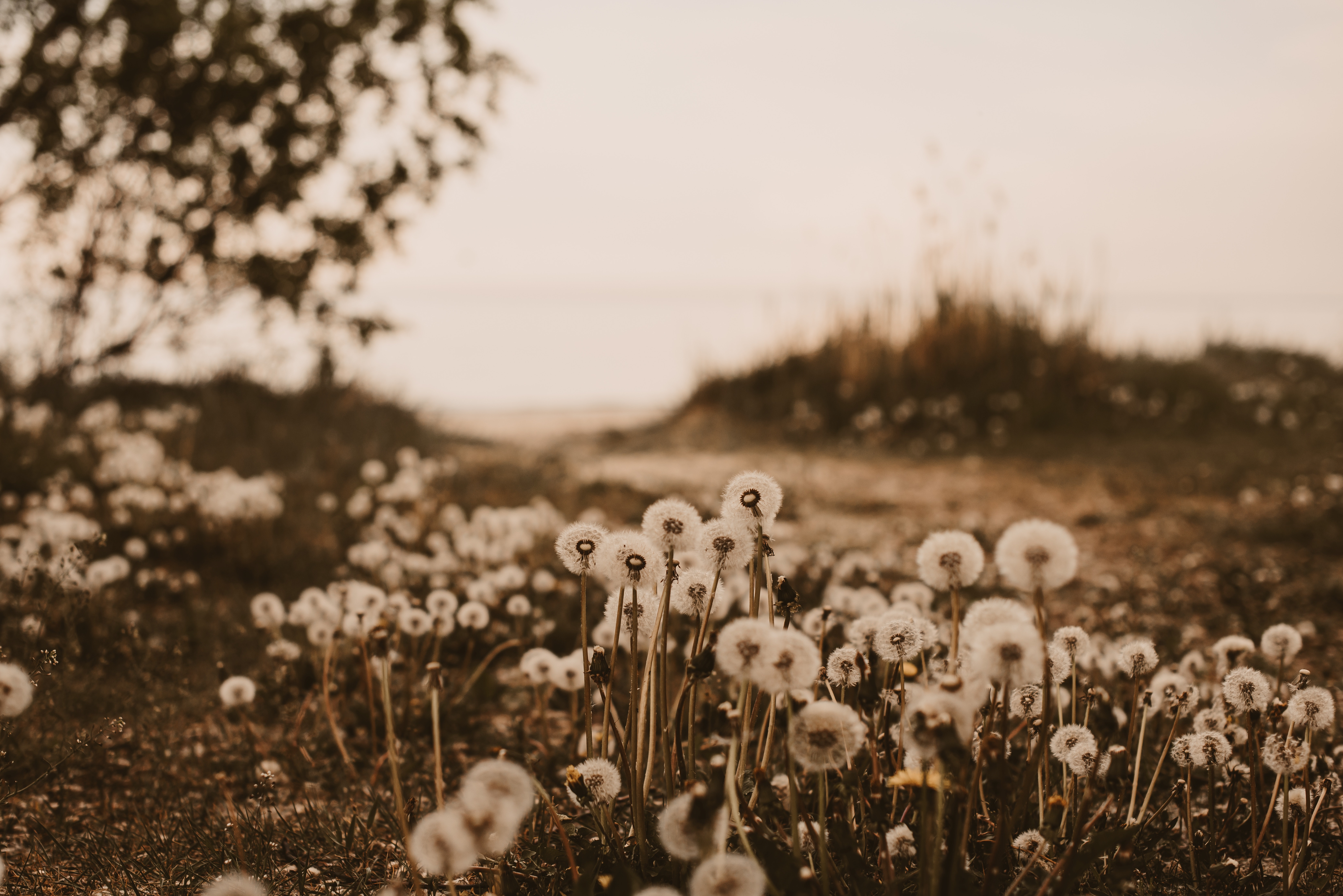 151473 download wallpaper Plants, Nature, Dandelions, Fluffy screensavers and pictures for free