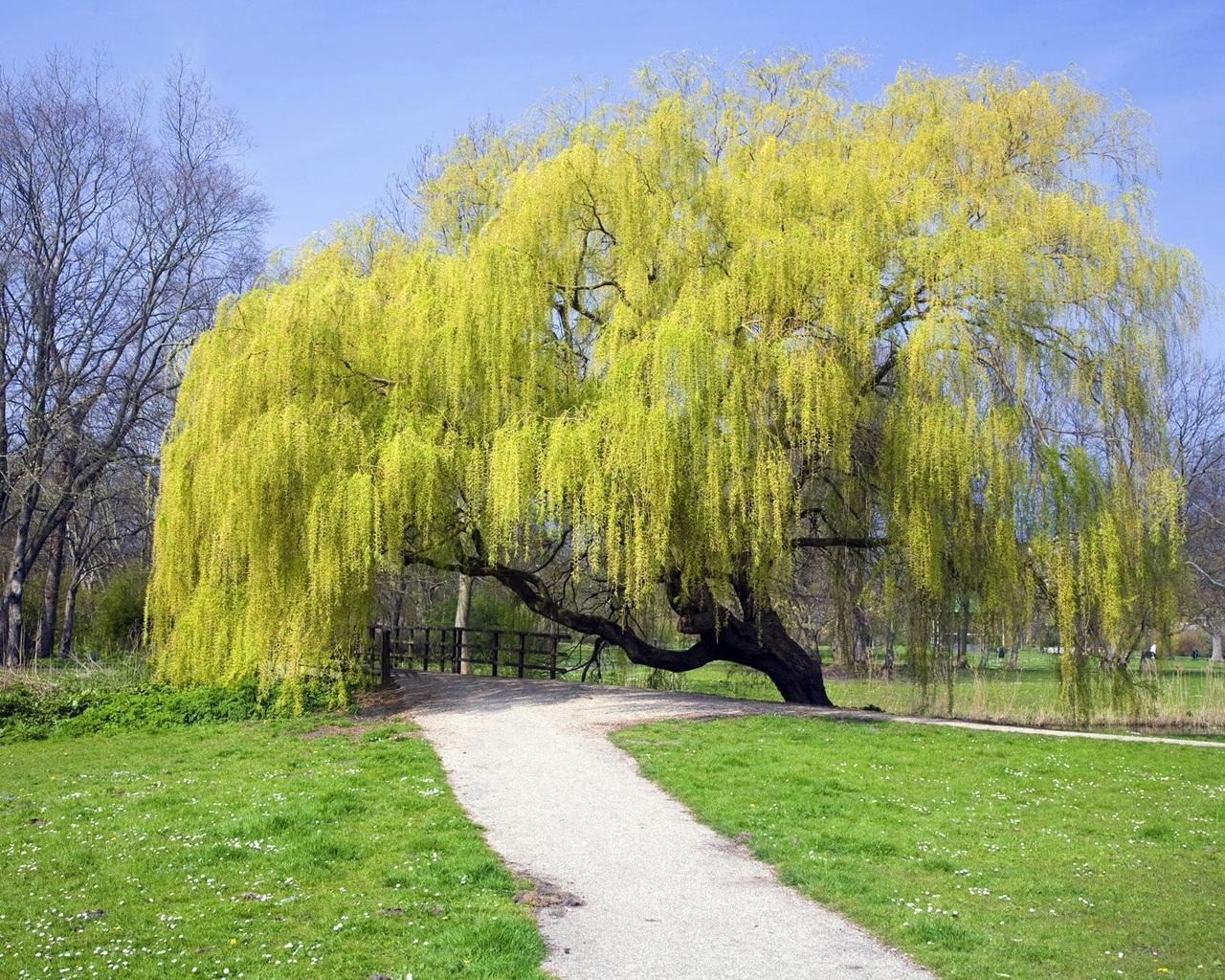 1092 скачать обои Пейзаж, Деревья, Дороги - заставки и картинки бесплатно