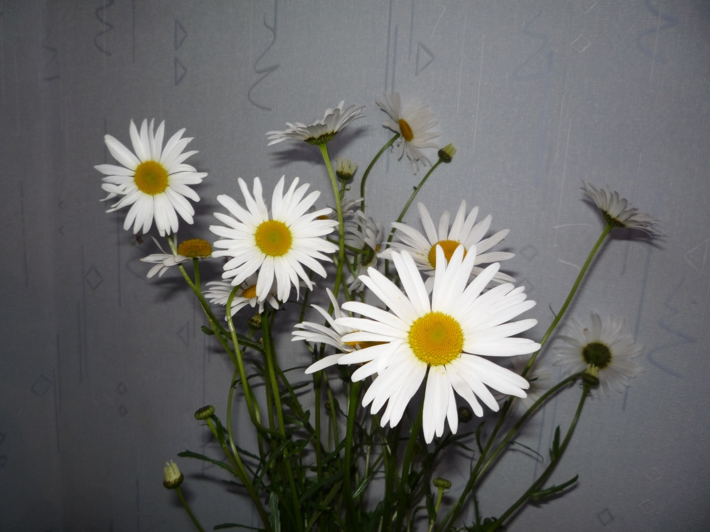 48561 download wallpaper Plants, Flowers, Camomile, Bouquets screensavers and pictures for free
