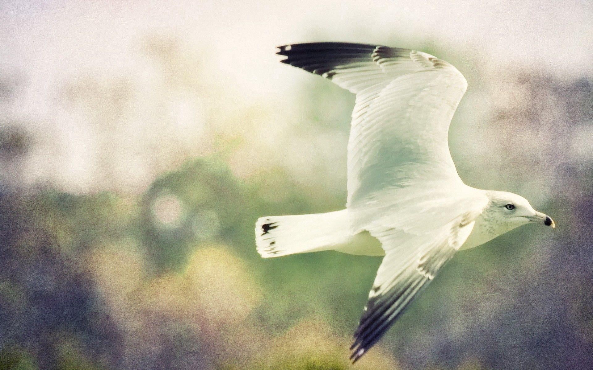 124801 скачать обои Животные, Птица, Полет, Небо, Смазано, Крылья - заставки и картинки бесплатно