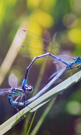113003 Screensavers and Wallpapers Insects for phone. Download Macro, Grass, Insects, Dragonflies pictures for free
