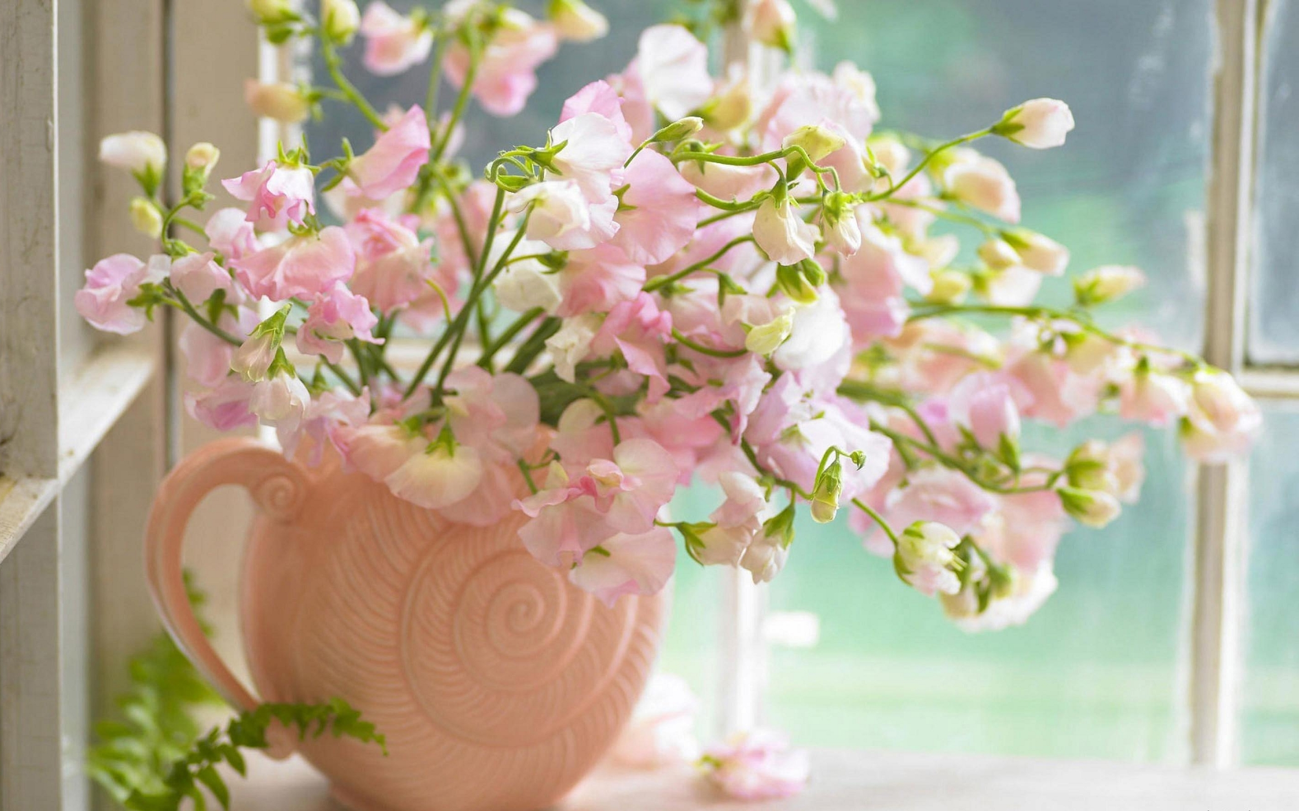 39015 télécharger le fond d'écran Plantes, Fleurs, Bouquets - économiseurs d'écran et images gratuitement