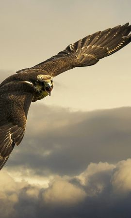 150756 download wallpaper Animals, Eagle, Flight, Sky, Wings, Clouds screensavers and pictures for free