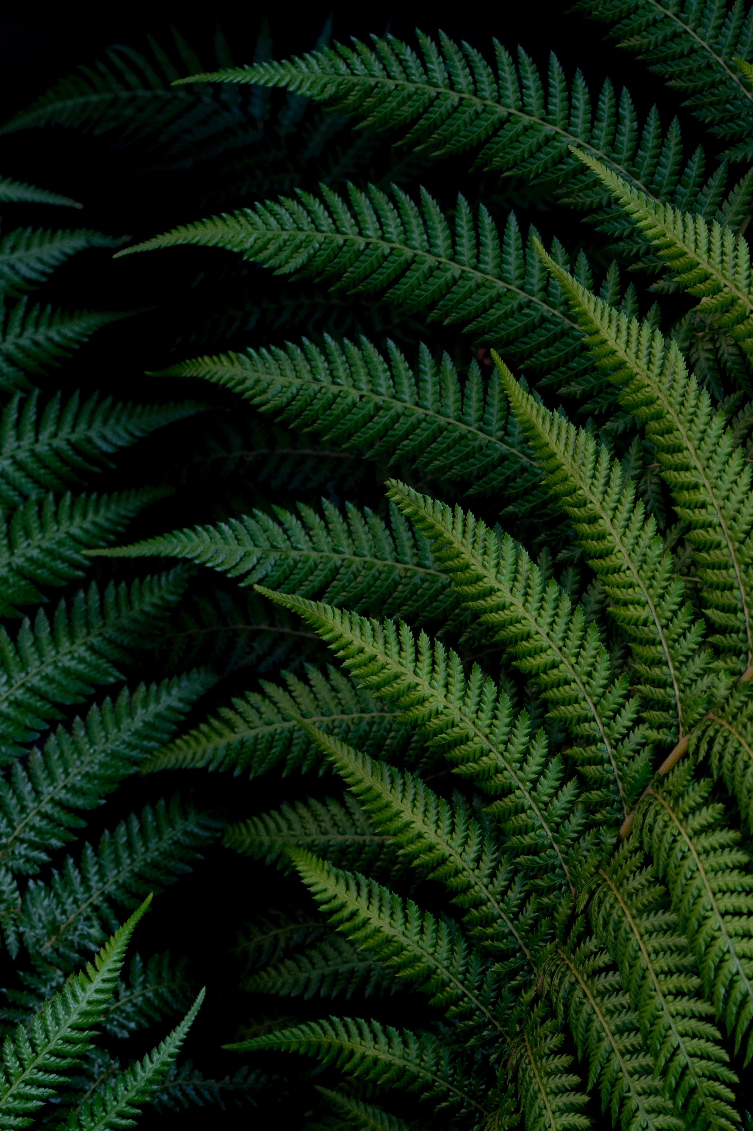125536 скачать обои Макро, Папоротник, Листья, Зеленый, Растение - заставки и картинки бесплатно
