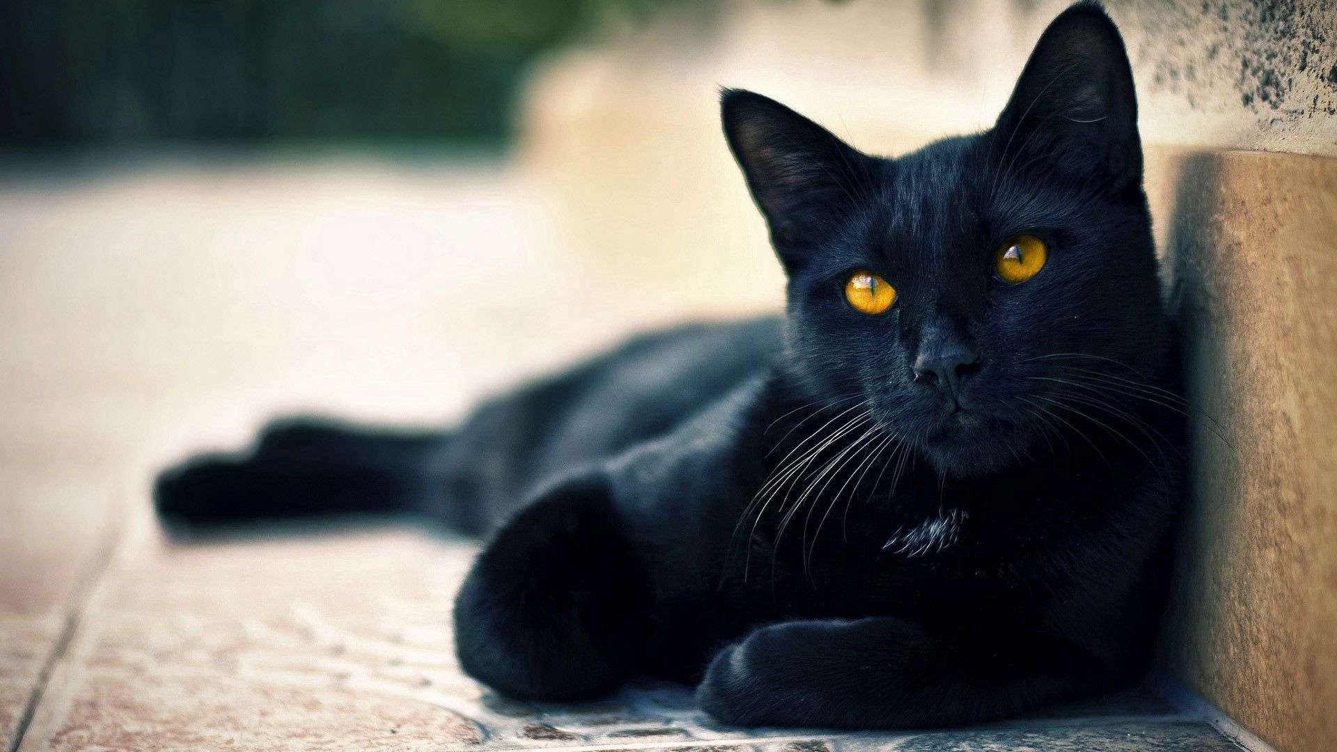70304 Screensavers and Wallpapers Beautiful for phone. Download Animals, To Lie Down, Lie, Muzzle, Beautiful, Sight, Opinion, Black Cat, Expectation, Waiting pictures for free