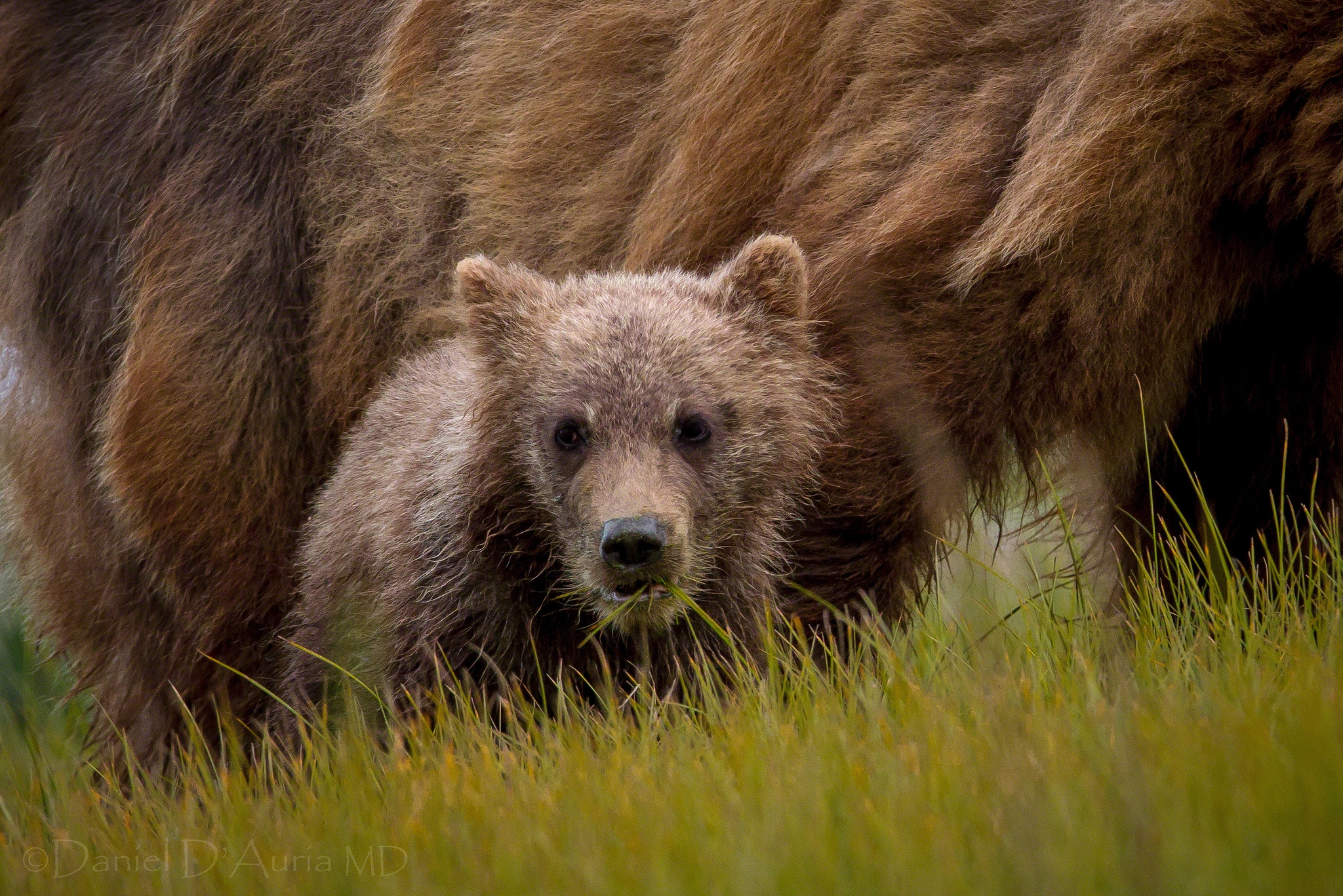 104900 Screensavers and Wallpapers Young for phone. Download Animals, Grass, Teddy Bear, Young, Joey, Bear Cub pictures for free