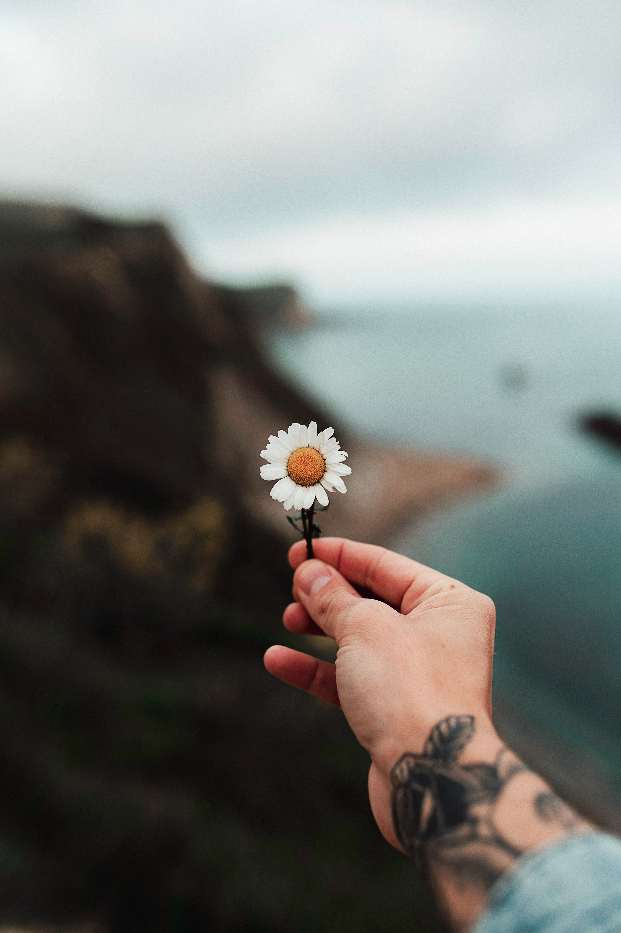 105955 download wallpaper Flowers, Camomile, Hand, Tattoo, Chamomile screensavers and pictures for free