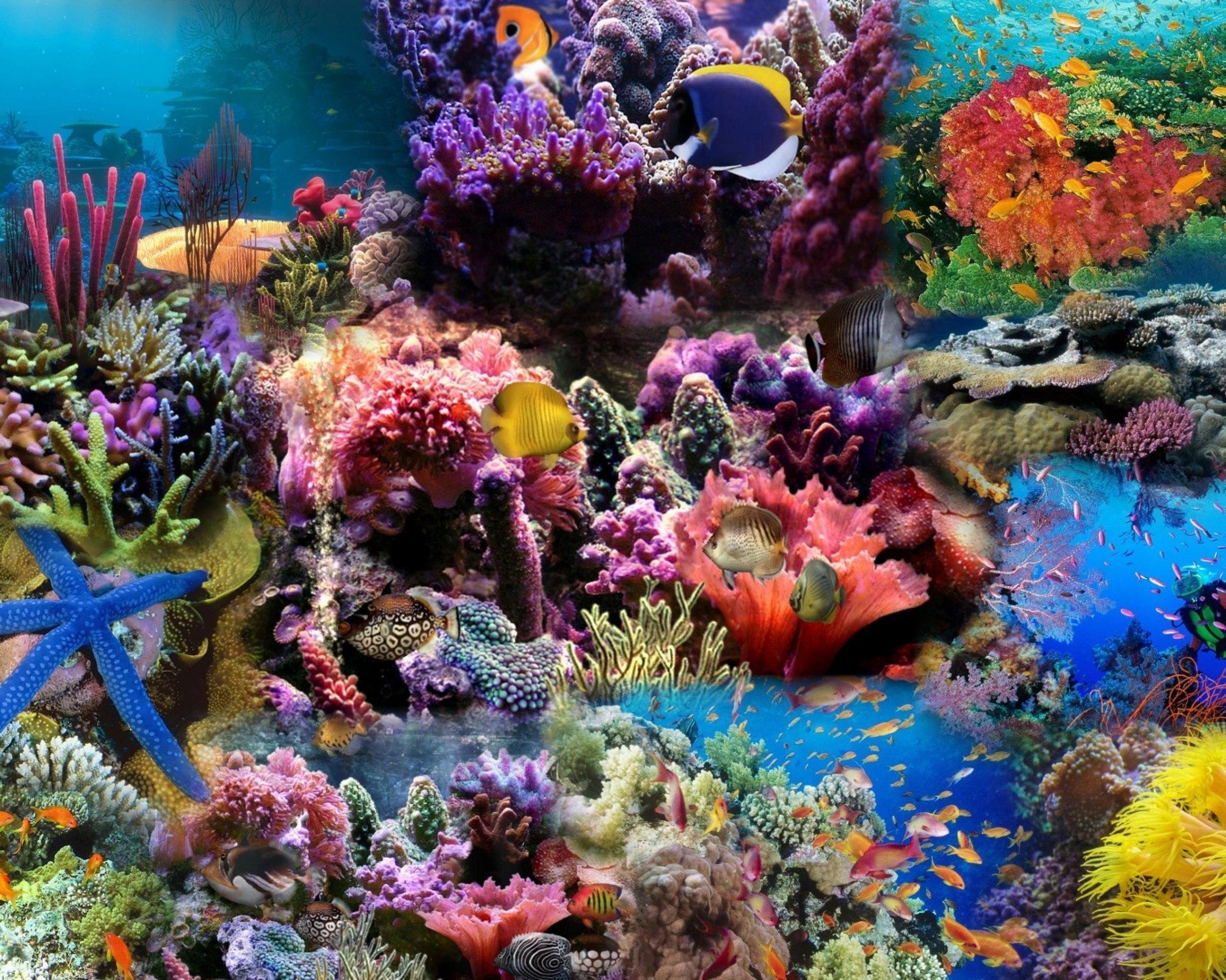 75847 Заставки и Обои Рыбы на телефон. Скачать Рыбы, Кораллы, Подводный Мир, Природа картинки бесплатно