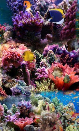 75847壁紙のダウンロード自然, 水中の世界, 水中ワールド, 魚, コーラル-スクリーンセーバーと写真を無料で