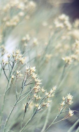 15523 скачать обои Растения, Фон - заставки и картинки бесплатно