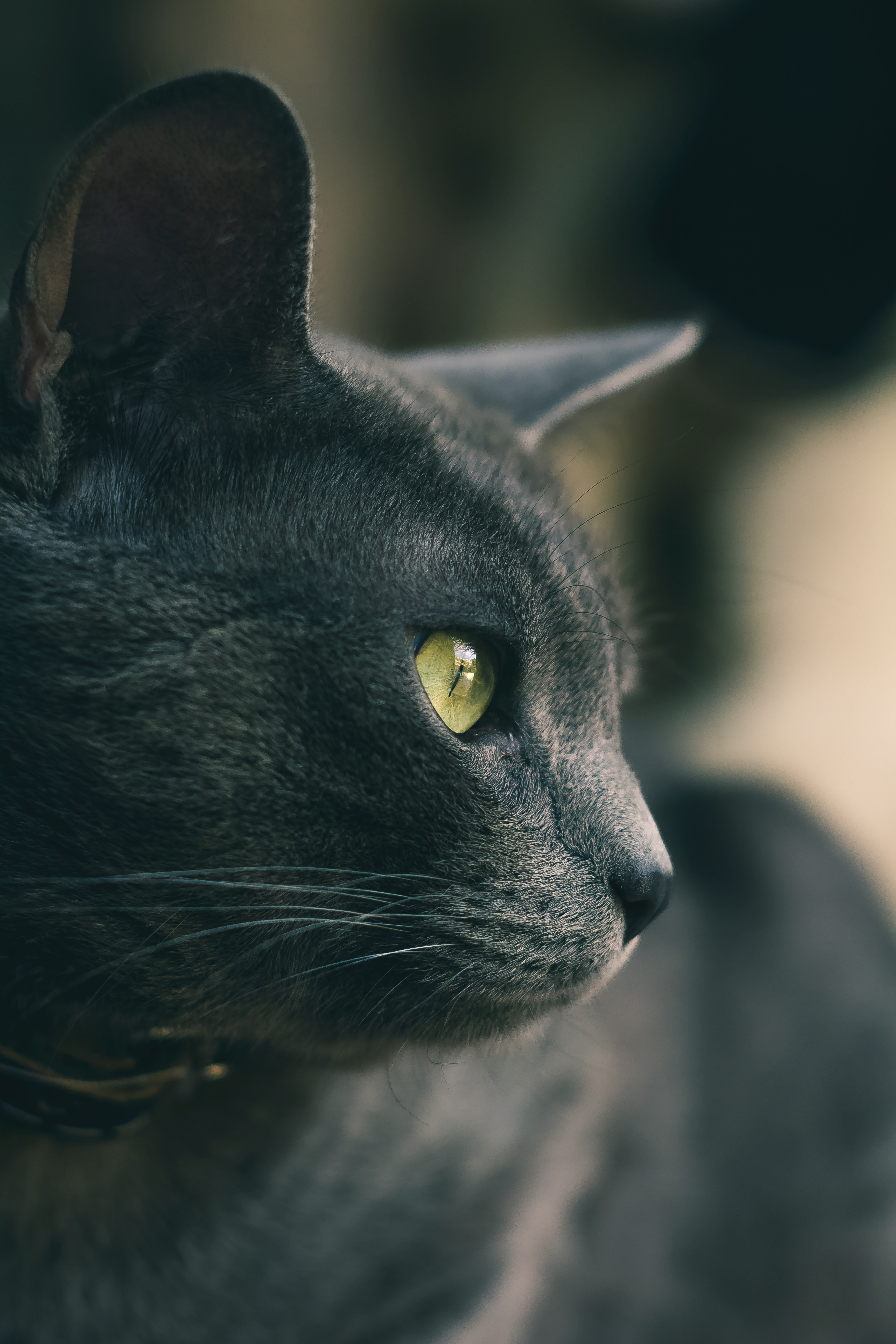 127082 download wallpaper Animals, Cat, Eyes, Nose, Wool, Grey screensavers and pictures for free