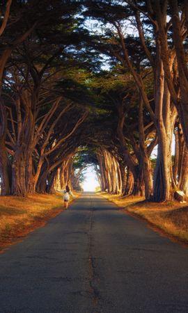 21074 скачать обои Пейзаж, Деревья, Дороги - заставки и картинки бесплатно