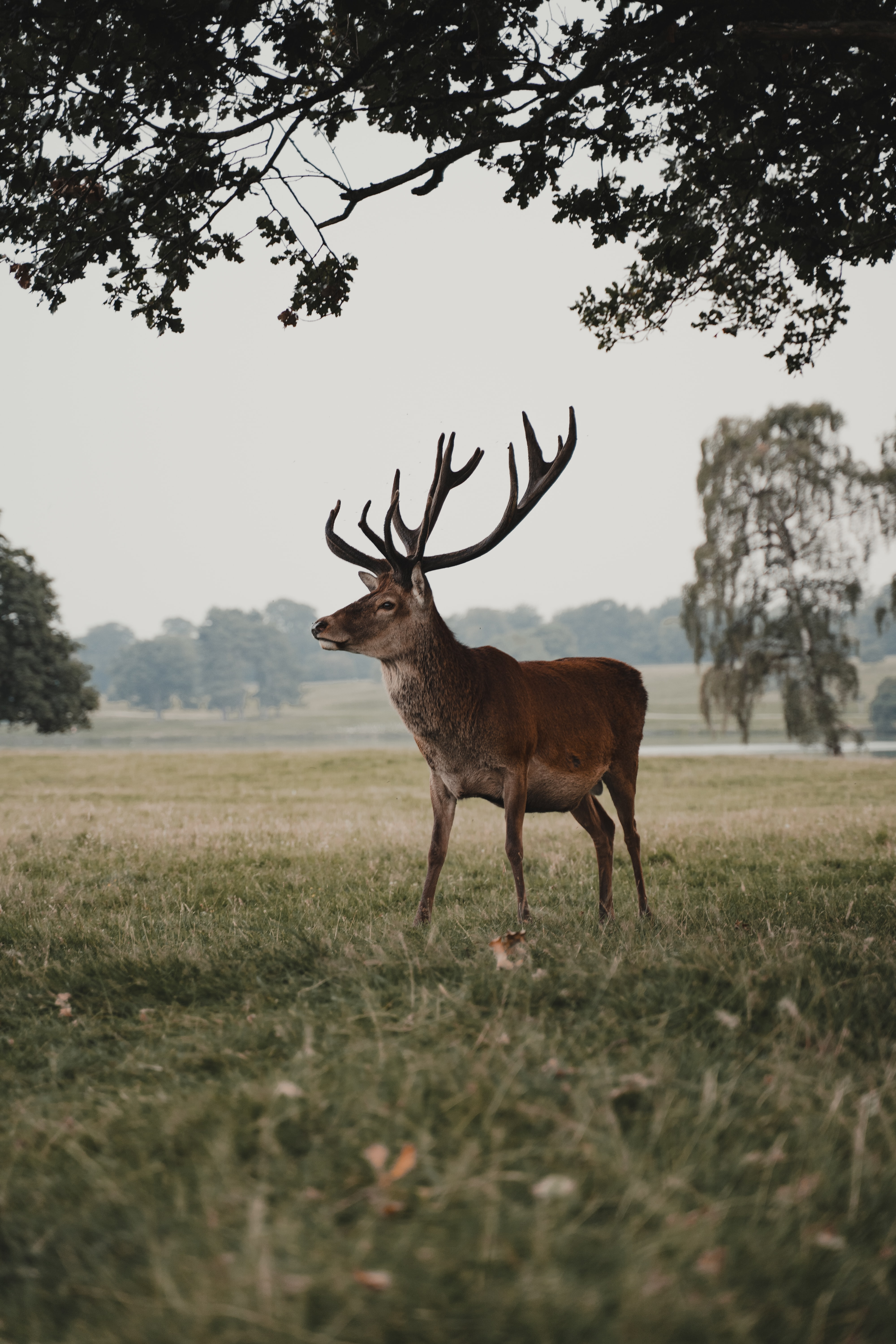 76628 download wallpaper Animals, Deer, Animal, Field, Wildlife screensavers and pictures for free