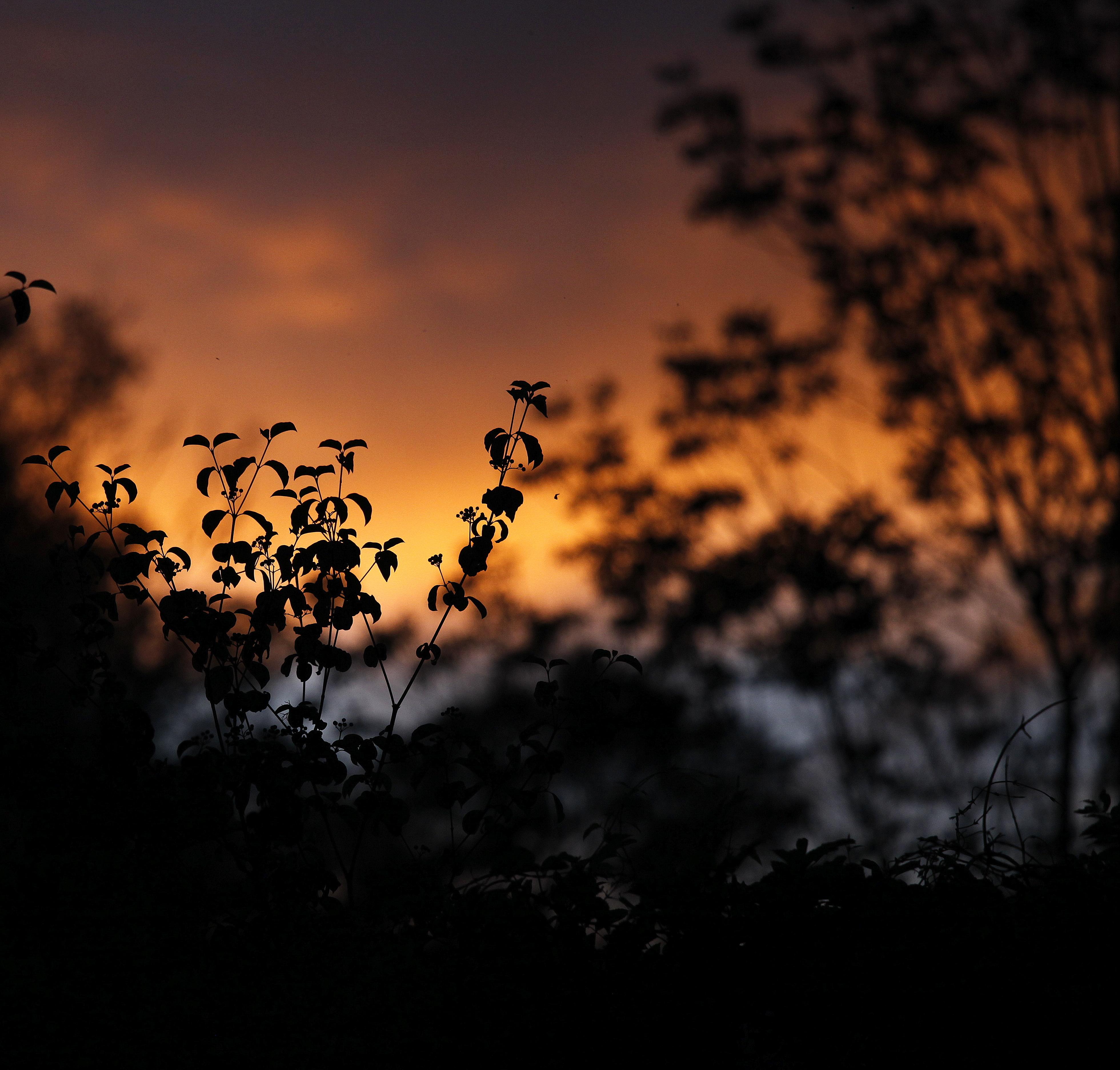 Скачать картинку Растения, Силуэты, Очертания, Закат, Листья, Темные в телефон бесплатно.