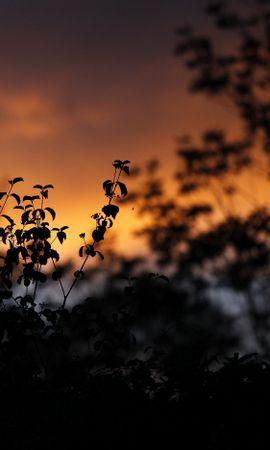 111885 скачать обои Темные, Листья, Силуэты, Очертания, Закат, Растения - заставки и картинки бесплатно