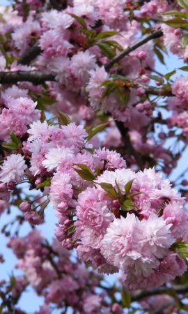 41234 télécharger le fond d'écran Plantes, Fleurs - économiseurs d'écran et images gratuitement