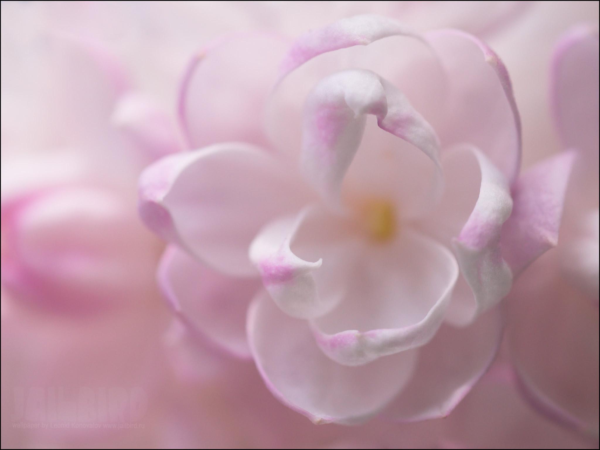 19353 скачать обои Растения, Цветы - заставки и картинки бесплатно