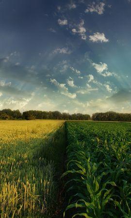 4312 скачать обои Пейзаж, Трава, Поля, Небо - заставки и картинки бесплатно