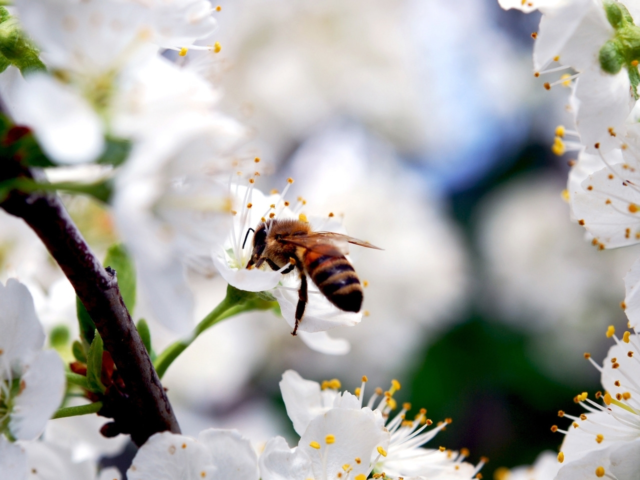 44318 Screensavers and Wallpapers Bees for phone. Download Insects, Bees pictures for free