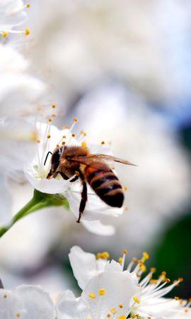 44318 télécharger le fond d'écran Insectes, Abeilles - économiseurs d'écran et images gratuitement