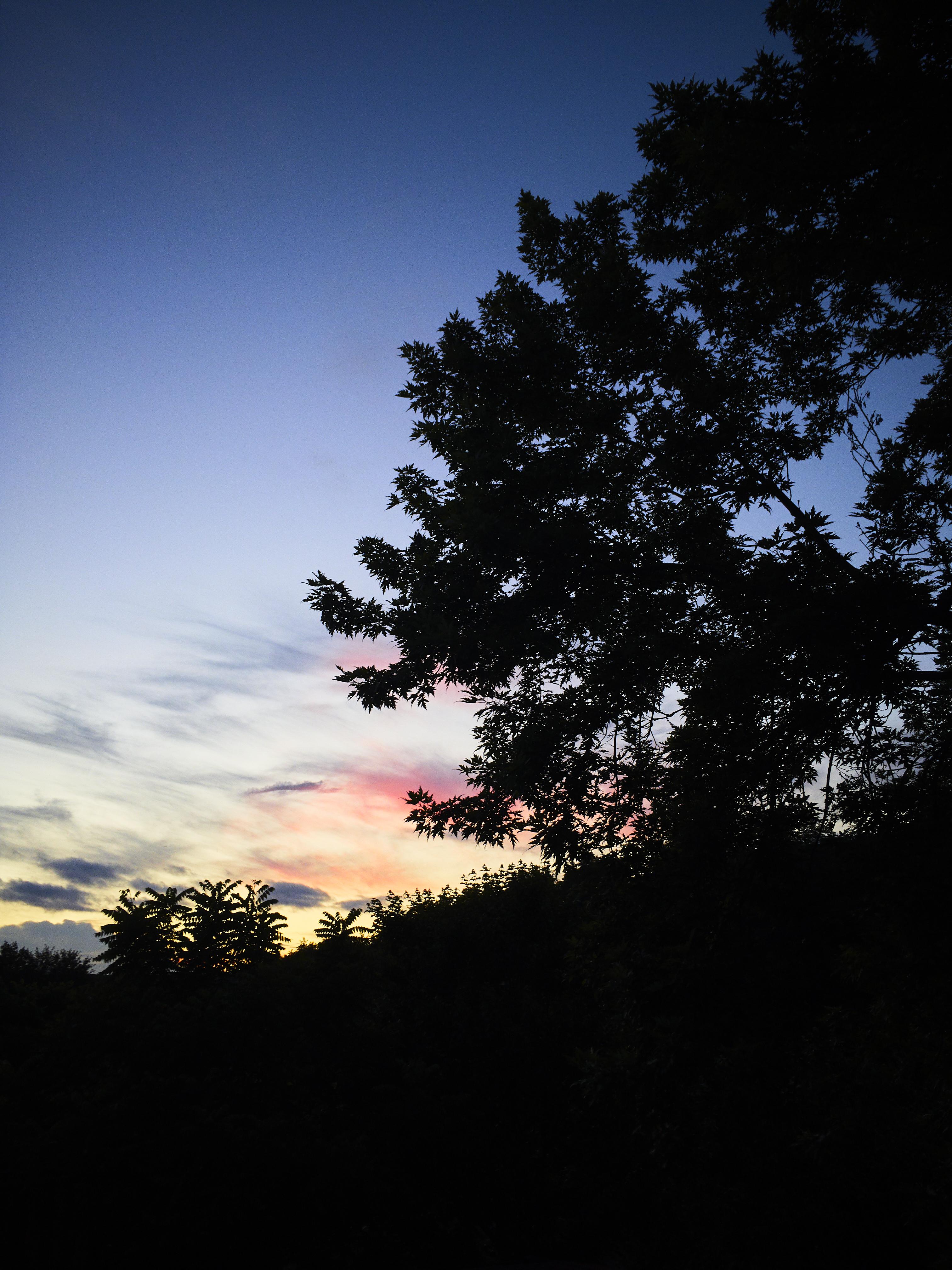 154579 скачать обои Природа, Деревья, Закат, Небо, Силуэт, Облака - заставки и картинки бесплатно