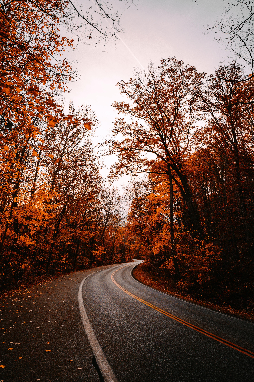 147610 Hintergrundbild herunterladen Herbst, Natur, Bäume, Straße, Wende, Drehen, Gefallene Blätter, Gefallenes Laub - Bildschirmschoner und Bilder kostenlos