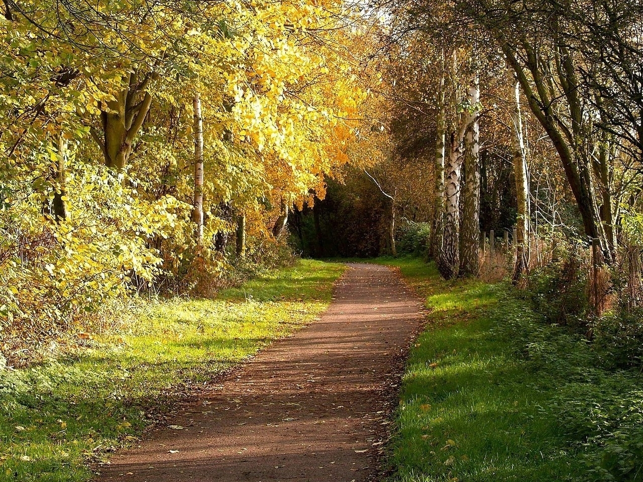 29998 download wallpaper Landscape, Trees, Roads, Autumn screensavers and pictures for free