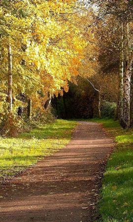 29998 скачать обои Пейзаж, Деревья, Дороги, Осень - заставки и картинки бесплатно