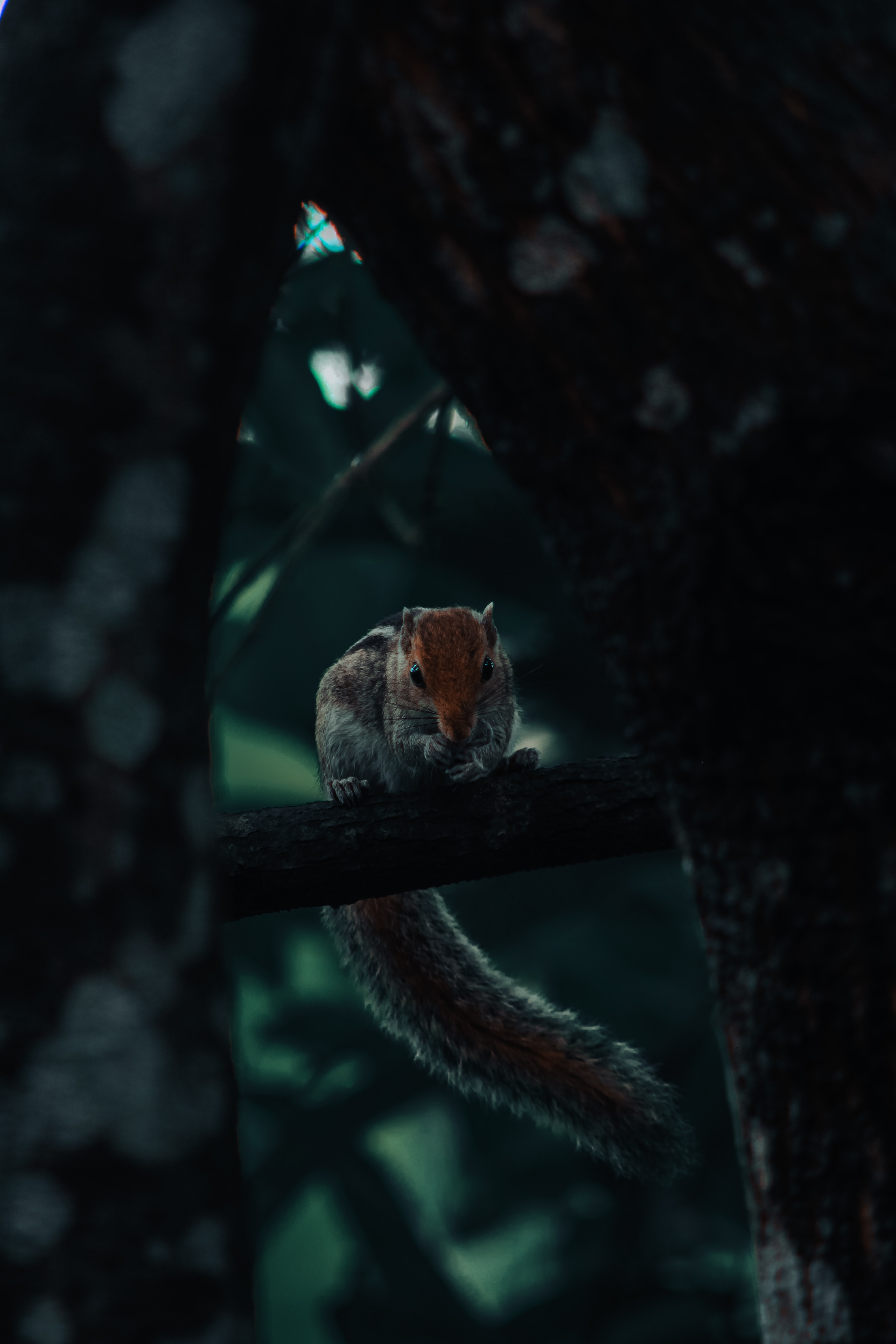 100520 download wallpaper Animals, Squirrel, Rodent, Tail, Wood, Tree screensavers and pictures for free