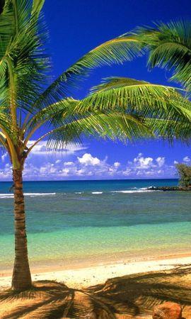 28003 скачать обои Пейзаж, Море, Пляж, Пальмы - заставки и картинки бесплатно