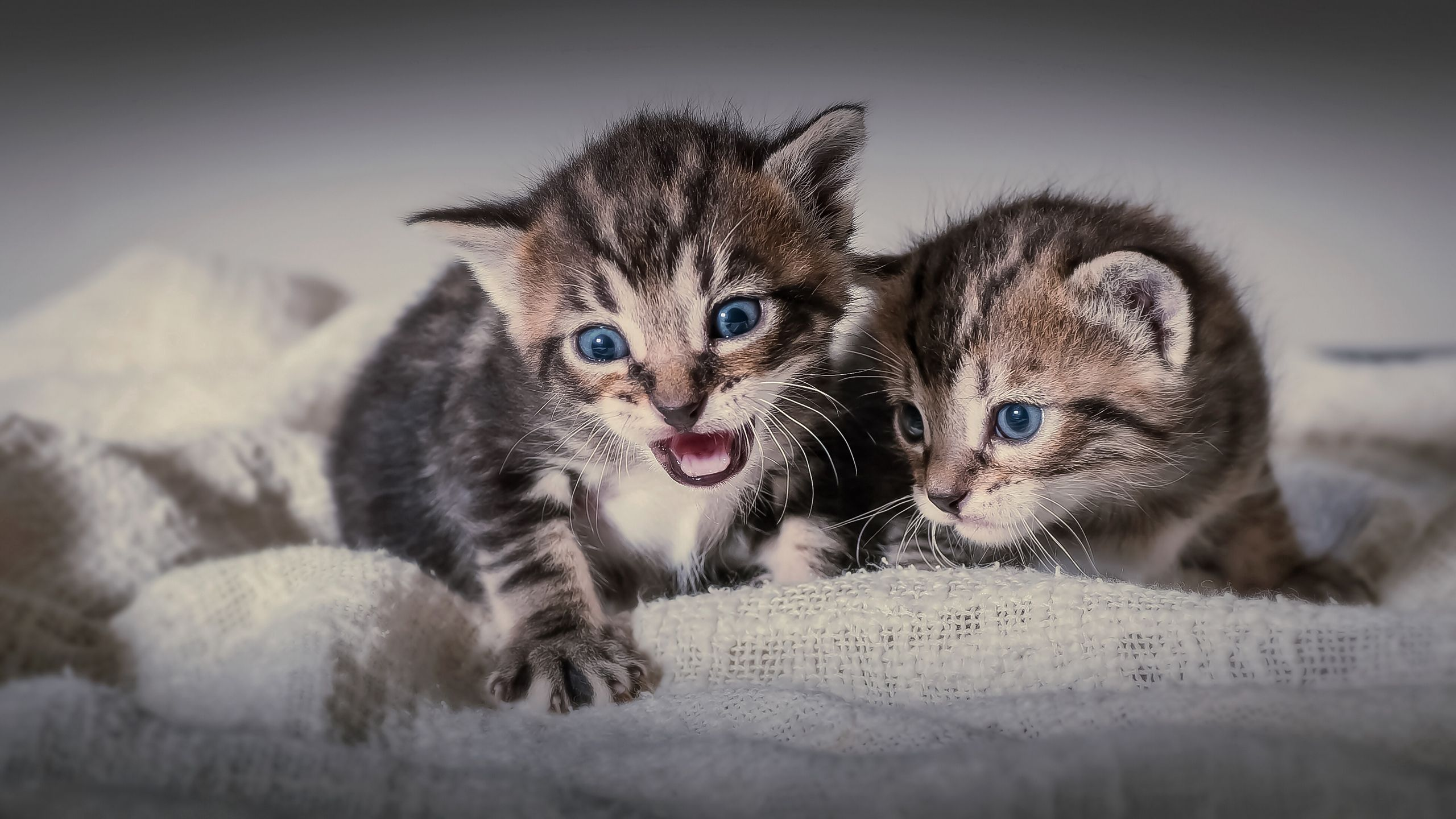 134420 download wallpaper Animals, Cats, Couple, Pair, Fright, Kittens screensavers and pictures for free