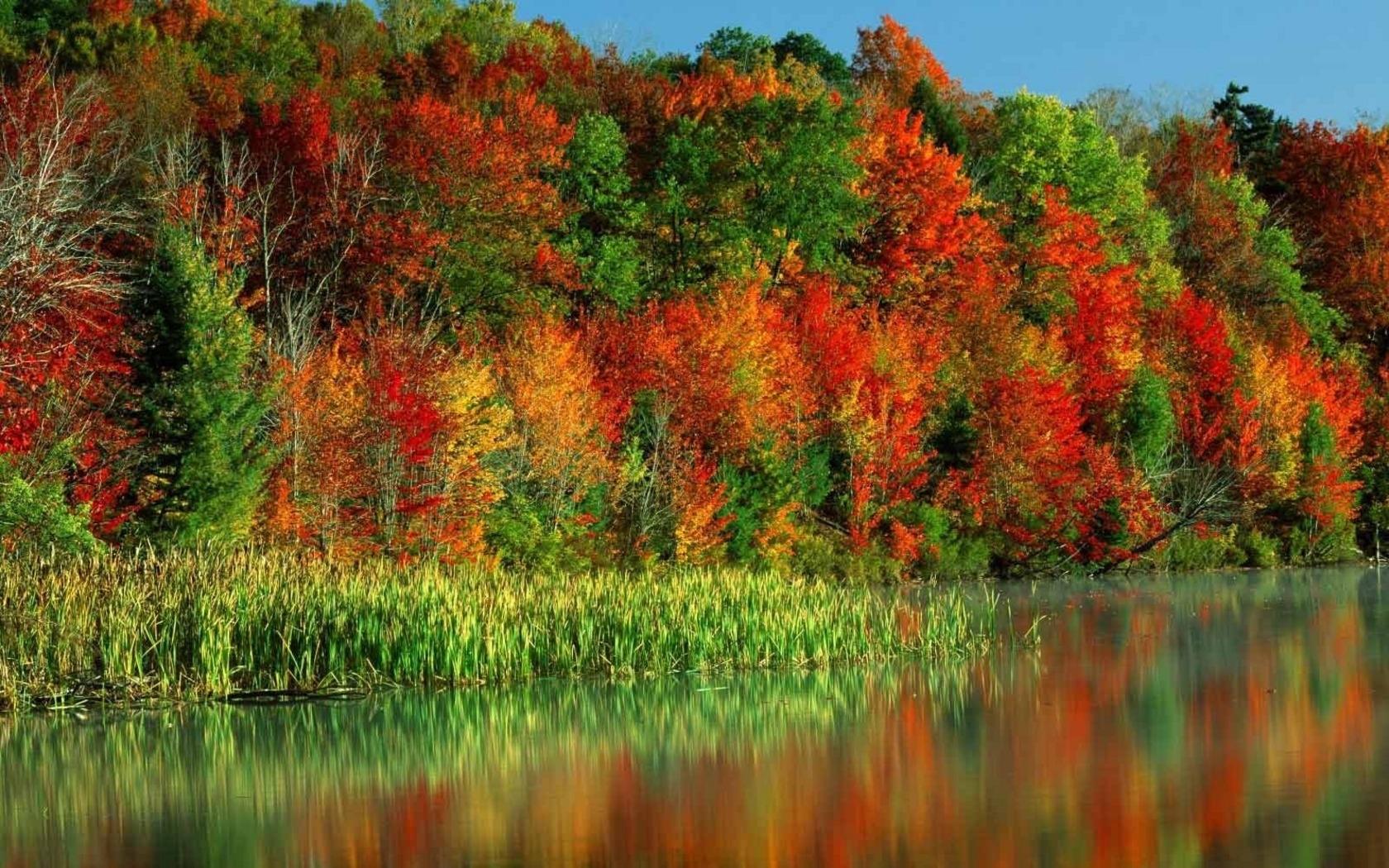 7752 скачать обои Пейзаж, Река, Деревья, Осень - заставки и картинки бесплатно