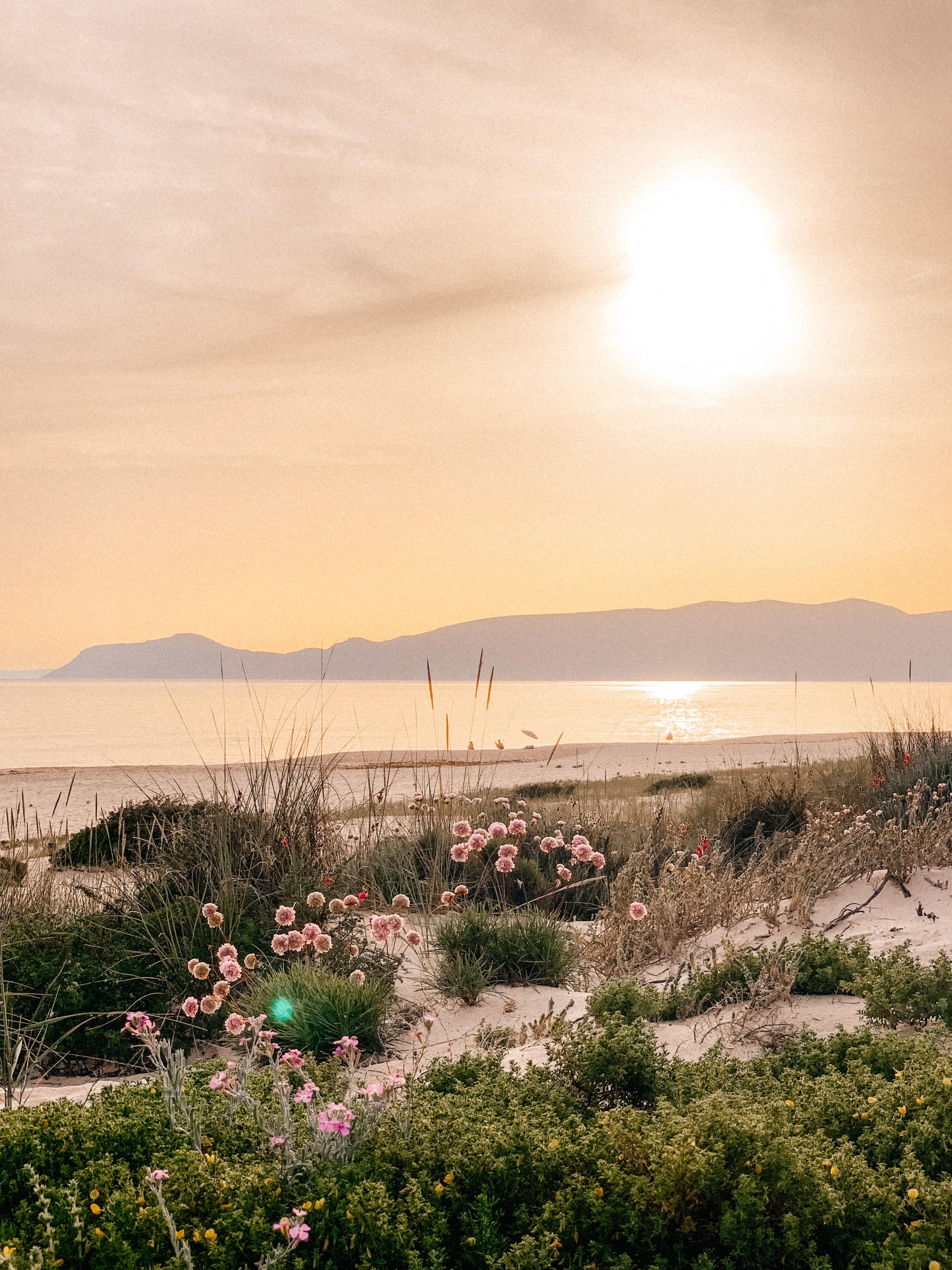 131259 скачать обои Природа, Растения, Пляж, Море, Горы, Цветы - заставки и картинки бесплатно