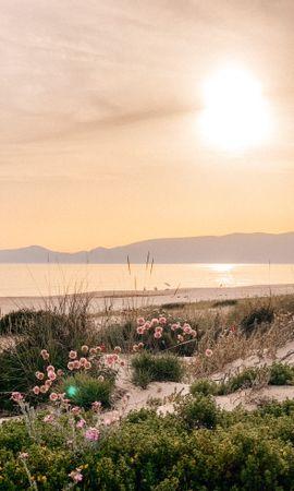 131259 descargar fondo de pantalla Naturaleza, Plantas, Playa, Mar, Montañas, Flores: protectores de pantalla e imágenes gratis