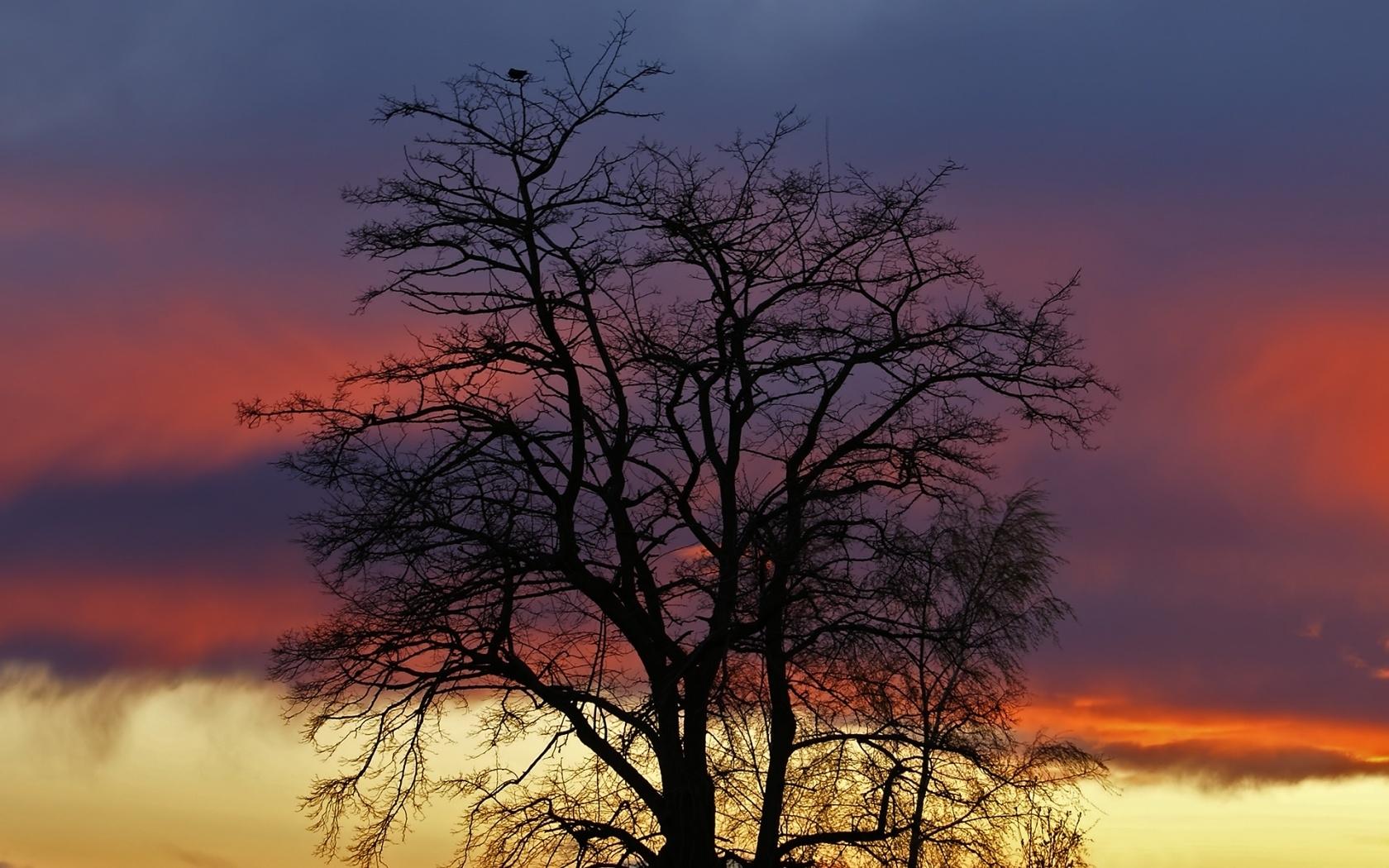 4086 скачать обои Растения, Пейзаж, Деревья, Небо - заставки и картинки бесплатно