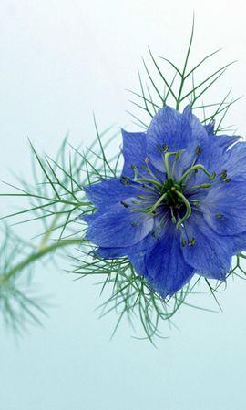 2541 descargar fondo de pantalla Plantas, Flores: protectores de pantalla e imágenes gratis