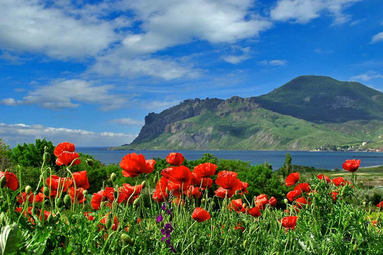 14527 скачать обои Растения, Пейзаж, Цветы, Горы, Маки - заставки и картинки бесплатно