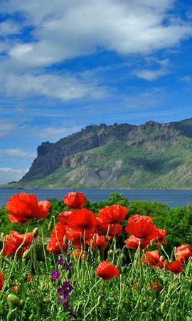 14527 télécharger le fond d'écran Plantes, Paysage, Fleurs, Montagnes, Coquelicots - économiseurs d'écran et images gratuitement