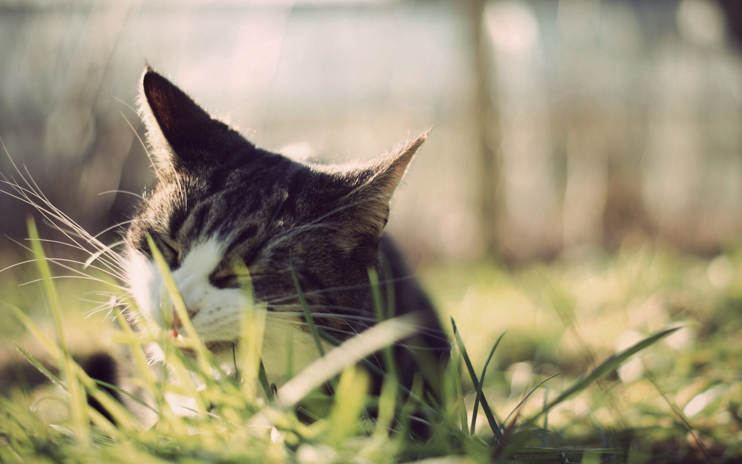 103048 download wallpaper Animals, Cat, Grass, Muzzle, Peek Out, Look Out screensavers and pictures for free