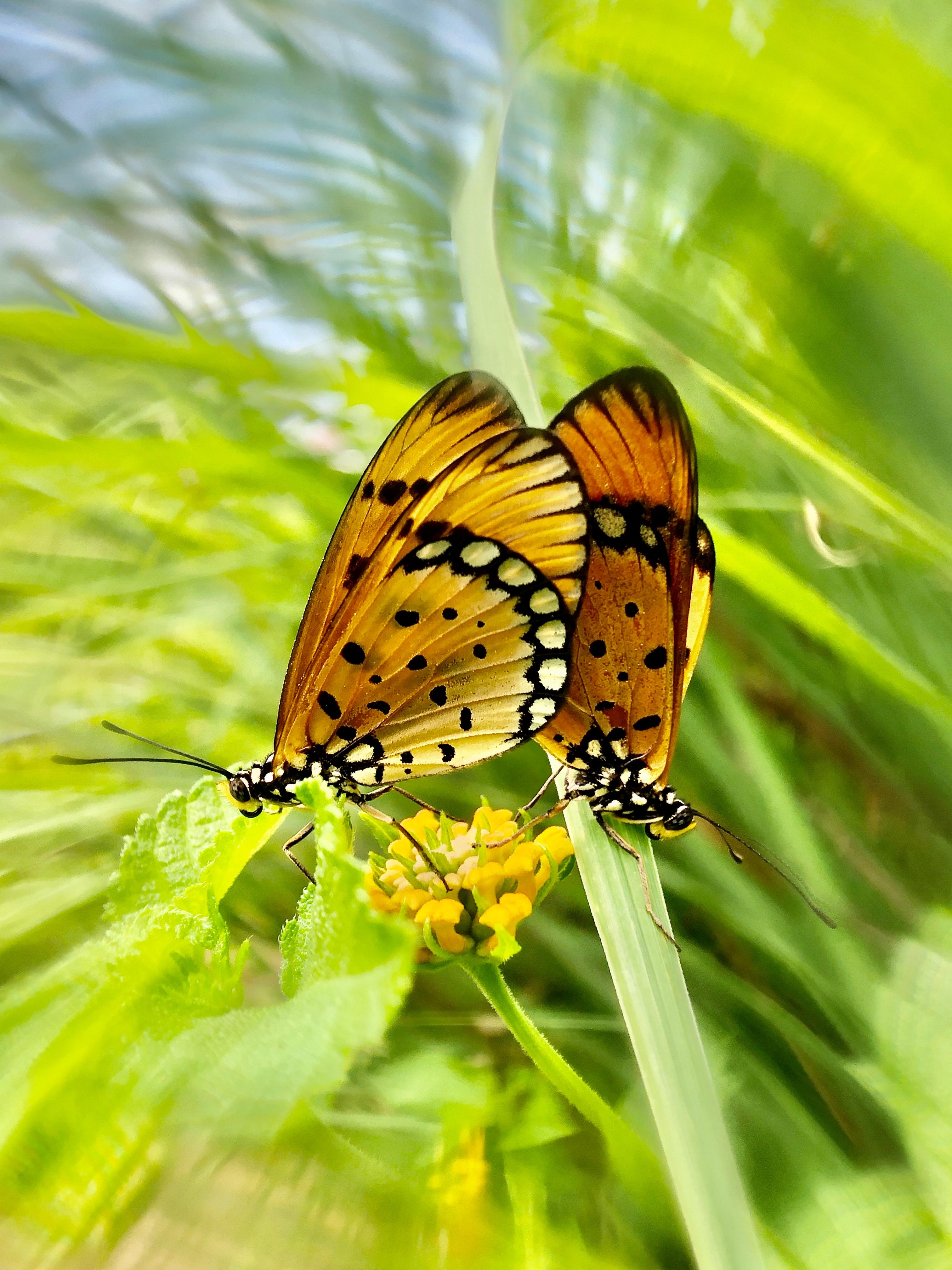 132434 Hintergrundbild herunterladen Schmetterlinge, Tiere, Blume, Muster, Flügel - Bildschirmschoner und Bilder kostenlos