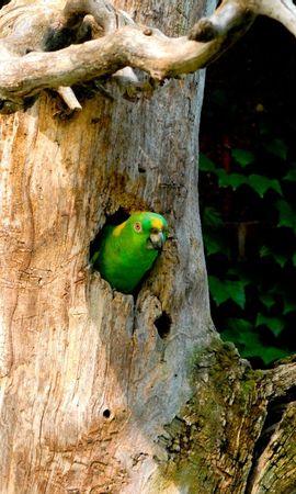 3652 baixar papel de parede Animais, Aves, Papagaios - protetores de tela e imagens gratuitamente