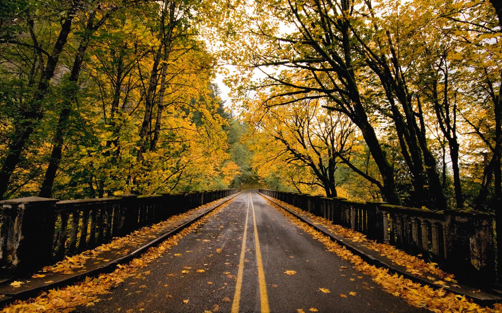 37426 скачать обои Пейзаж, Дороги, Осень - заставки и картинки бесплатно