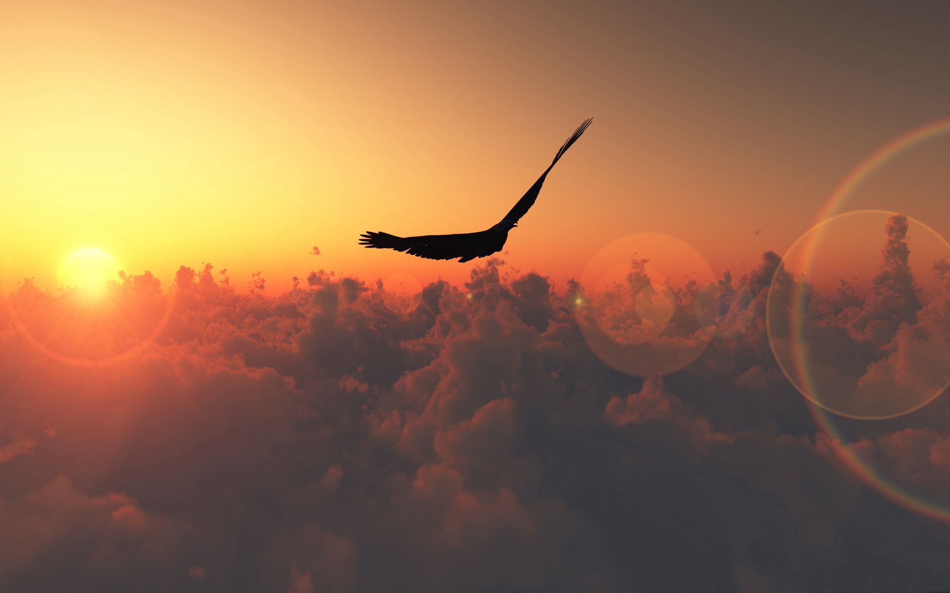 139570 download wallpaper Animals, Sun, Clouds, Bird, Flight screensavers and pictures for free