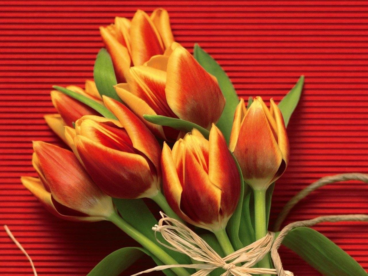 27538 скачать обои Растения, Цветы, Тюльпаны - заставки и картинки бесплатно