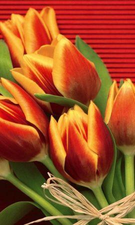 27538 télécharger le fond d'écran Plantes, Fleurs, Tulipes - économiseurs d'écran et images gratuitement