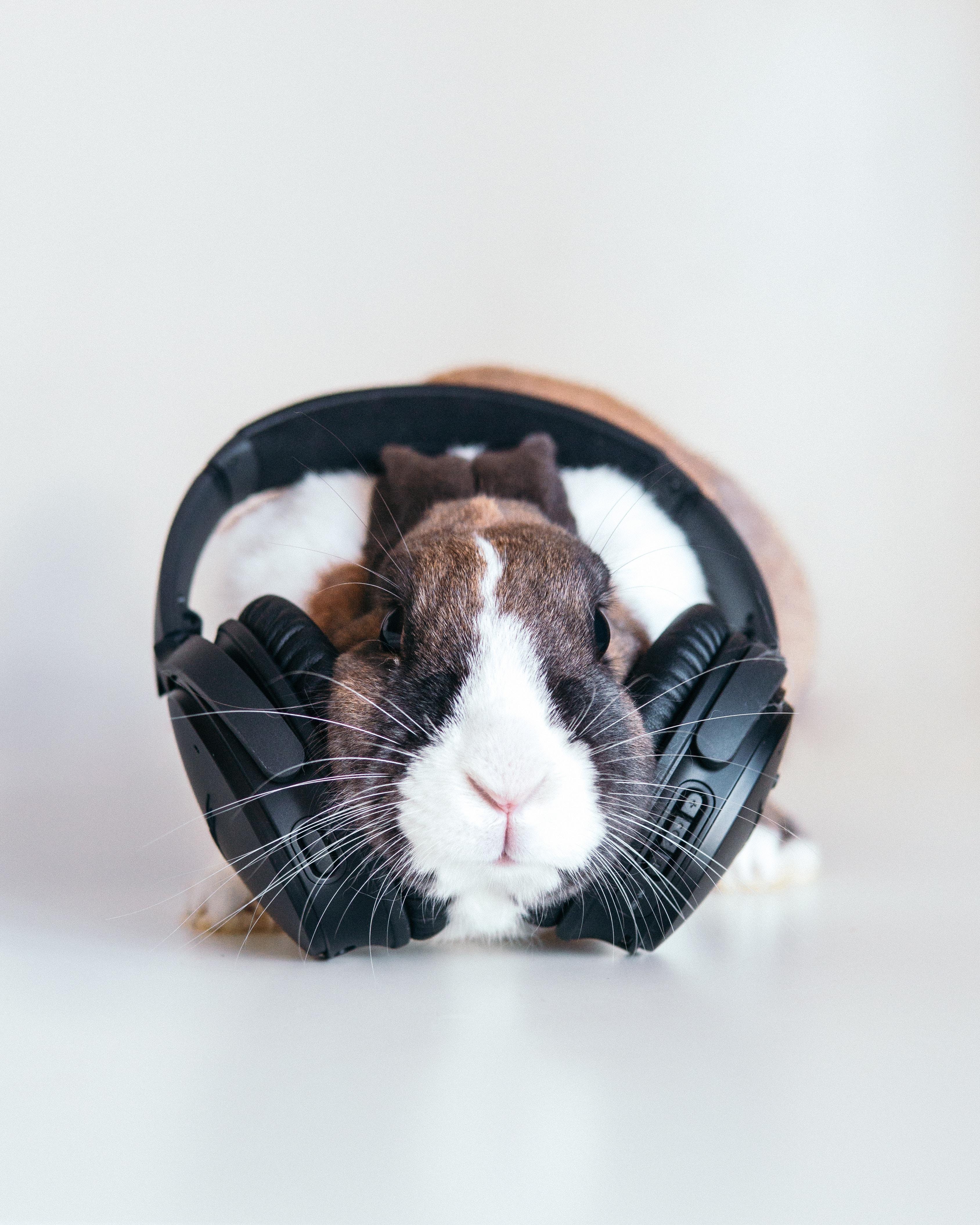 132975 Hintergrundbild herunterladen Musik, Kaninchen, Kopfhörer, Audio - Bildschirmschoner und Bilder kostenlos