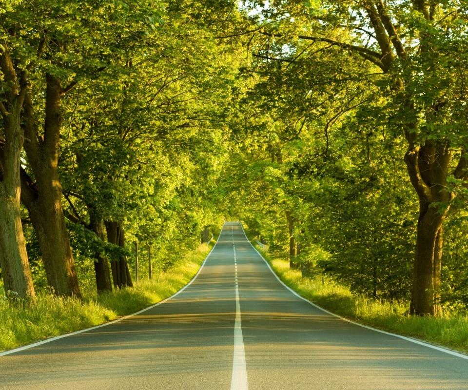 20330 скачать обои Пейзаж, Деревья, Дороги - заставки и картинки бесплатно