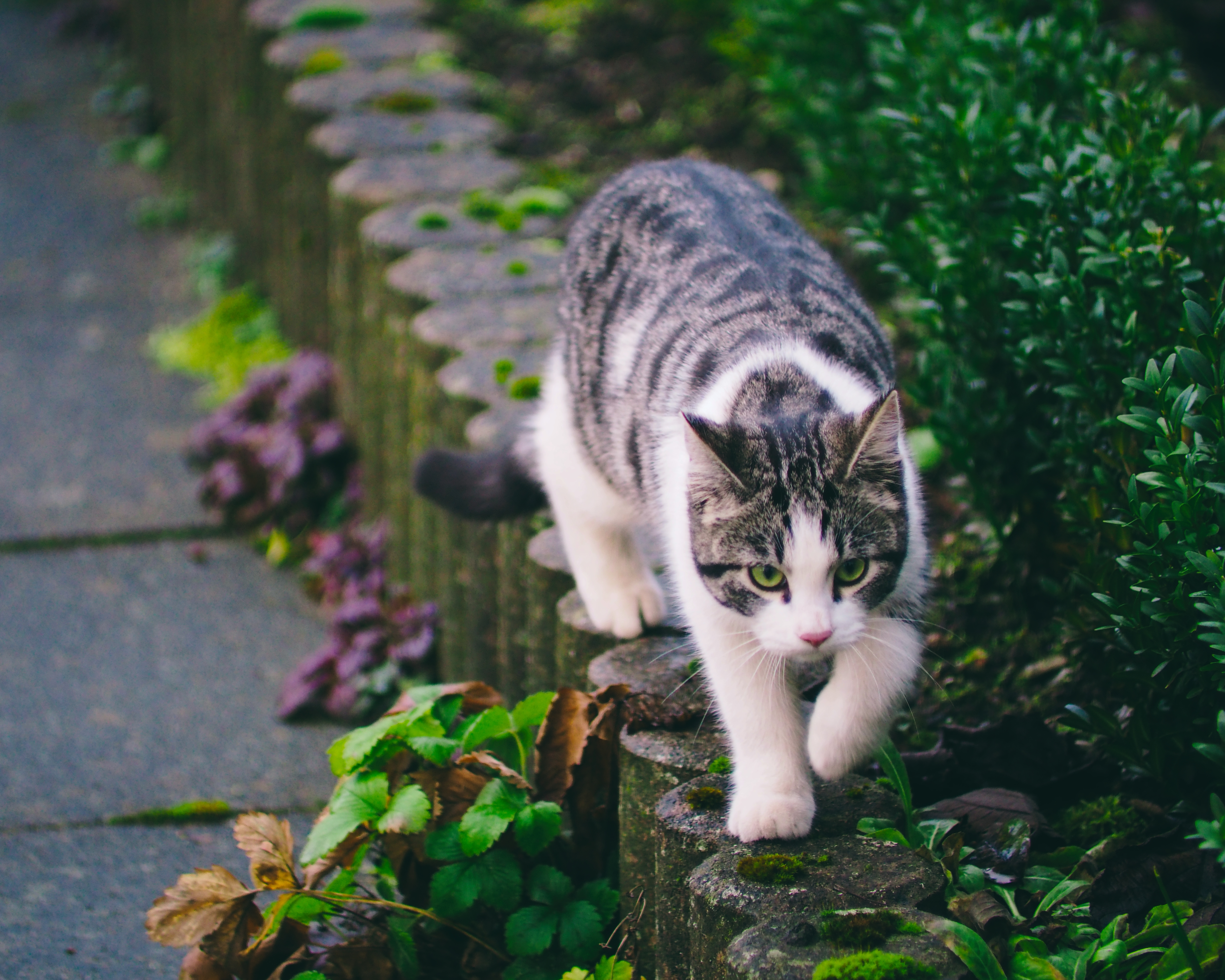 82466 Screensavers and Wallpapers Pet for phone. Download Animals, Cat, Striped, Pet, Walk pictures for free