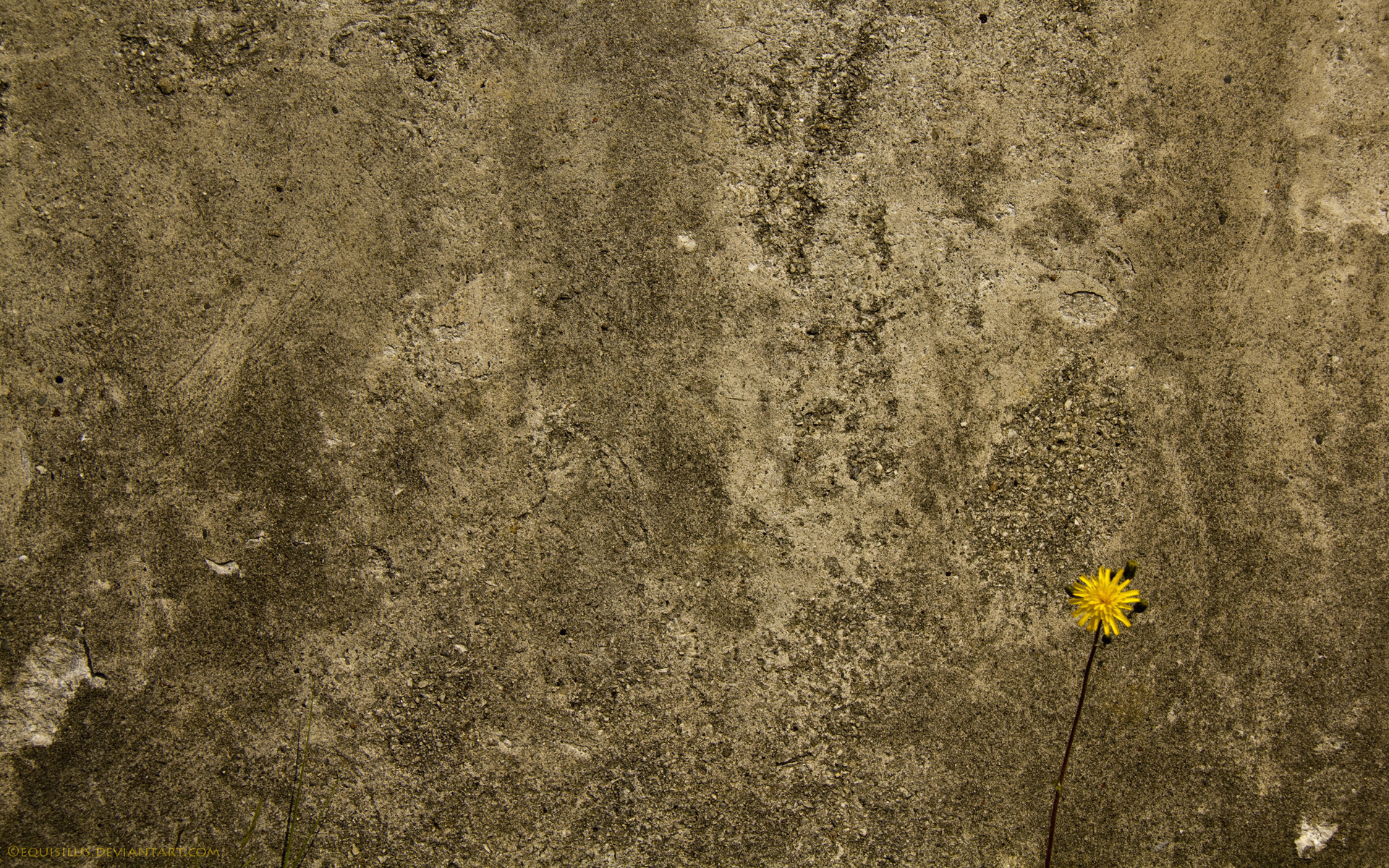 10747 download wallpaper Plants, Flowers, Dandelions screensavers and pictures for free